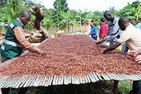 Ghana should worry about China's cocoa production
