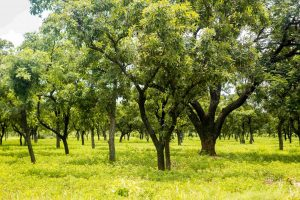Read more about the article 'Green Ghana Day' – Ghanaians to plant 5 million trees nationwide t'day