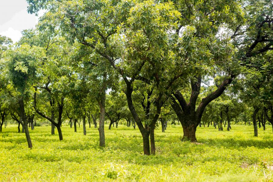 'Green Ghana Day' – Ghanaians to plant 5 million trees nationwide t'day