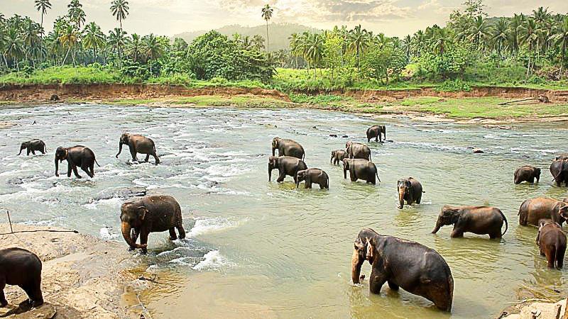 First Kenyan wildlife census shows increase of elephants, giraffes